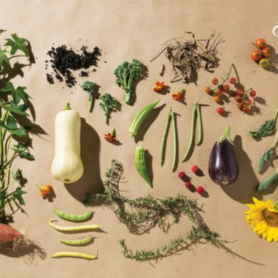 Create Your Own Sustainable Garden