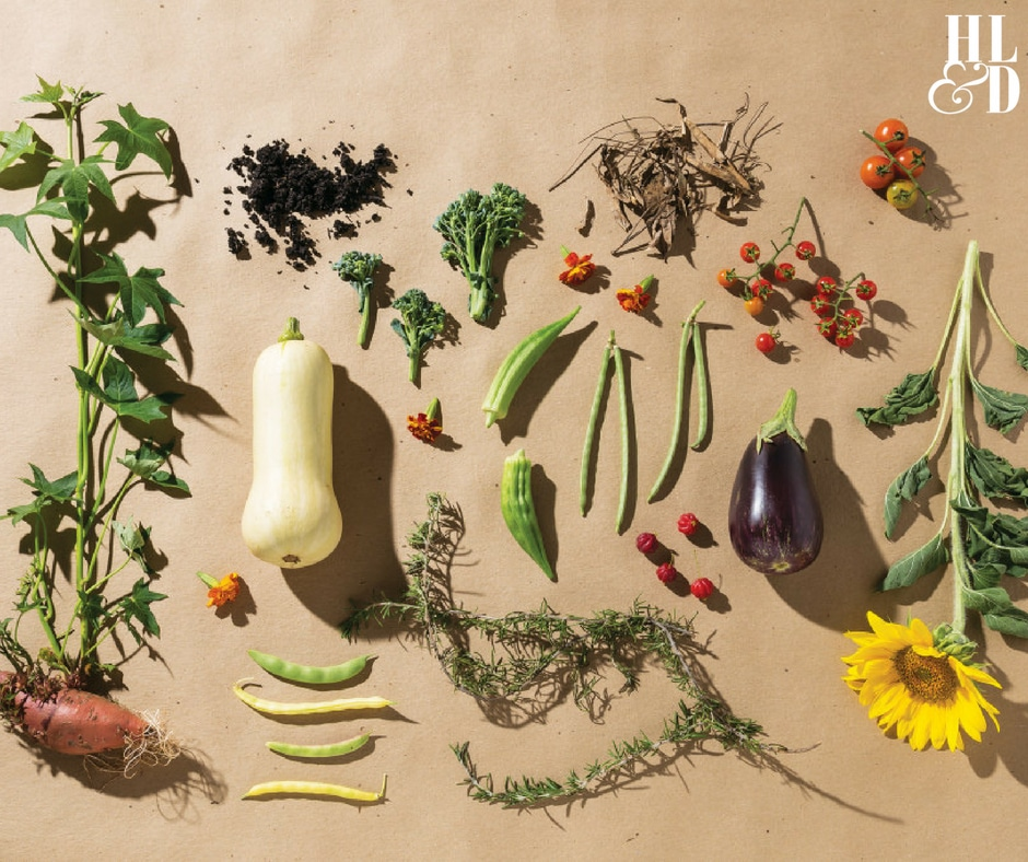 Create Your Own Sustainable Garden - Home Life & Design